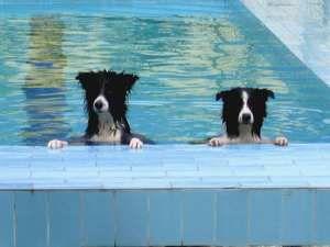 Davvero una bellissima iniziativa quella di Ilaria Boero, fondatrice di Skadog, centro cinofilo che si trova a Sestri Levante, in provincia di Genova. Un luogo paradisiaco, dove il divertimento e il benessere sono condivisi fra cani e umani, dotato di ampi spazi per correre in libertà, fare sport, giocare, dove i cani possono fare il bagno in piscina e molto altro! Il team del centro è formato da vari istruttori che si aggiornano costantemente il cui scopo è migliorare il rapporto…