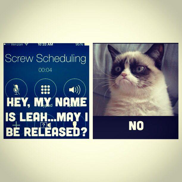 Grumpy cat. Flight attendant problems with crew scheduling