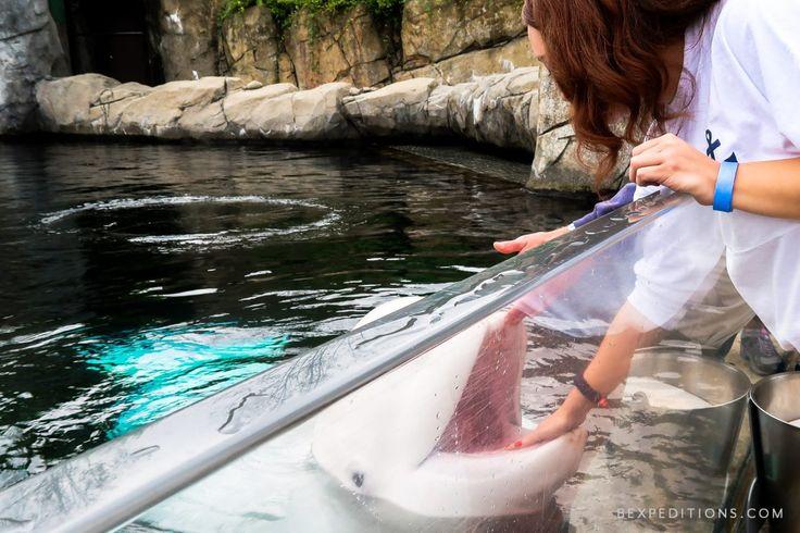 Best 25 Mystic Aquarium Ideas On Pinterest Connecticut