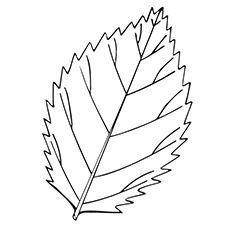 coloring pages oak leaf - photo#33