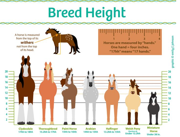 An introduction to how horses are measured and how different breeds vary in size.