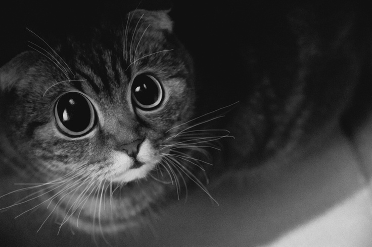 Lol!: Boot S Eyes, Cat Or, Kitty Cats, Cute Cats, Big Eyes, Cat Eyes, Freaky Cat, Boots