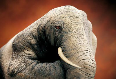 .Animal Painting, Hands Painting, Elephant Art, Painting Art, Body Painting, Body Art, Daniel Guido, Handsart, Hands Art
