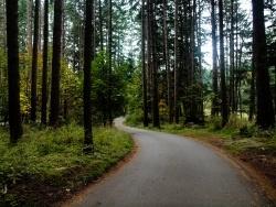Salt Spring Road - Kara Johancsik