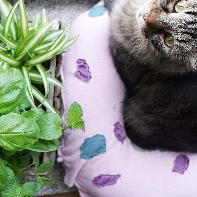 Mit Haustieren Ist Das Mit Den Zimmerpflanzen So Eine Sache Wusstet Ihr Dass Ein Grossteil Der Zimmerpfl Kleine Einmachglaser Geschenke Selber Machen Haustier