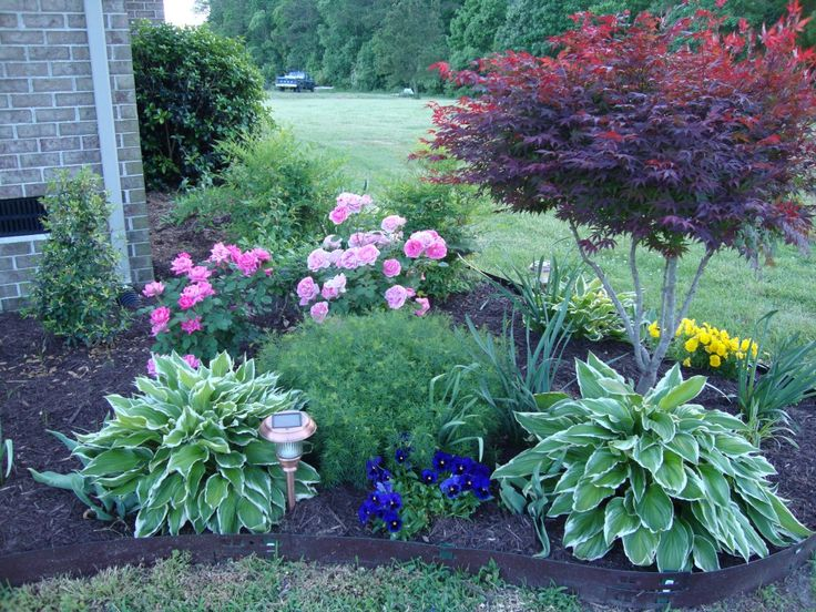 87 best images about maple bed on pinterest shade garden for Best plants for front flower bed