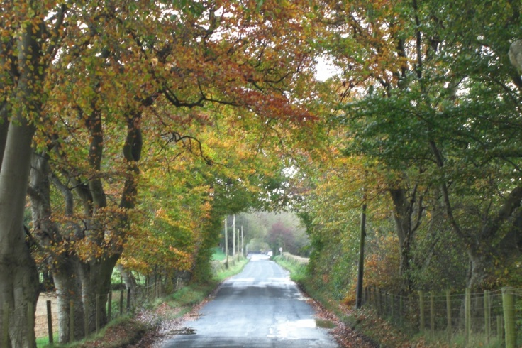 Love my road in Autumn