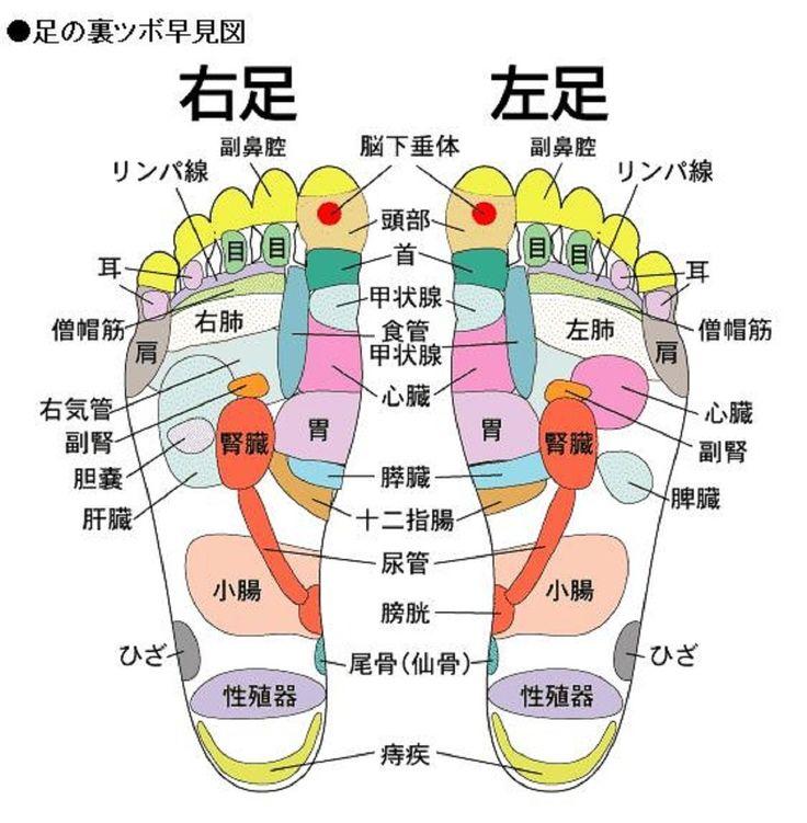 「足 の 裏 ツボ」の画像検索結果