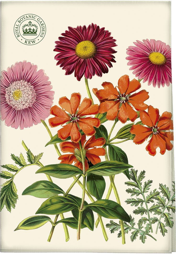 Great The Royal Botanic Gardens, Kew, Garden Delights Painted Daisy Tea Towel