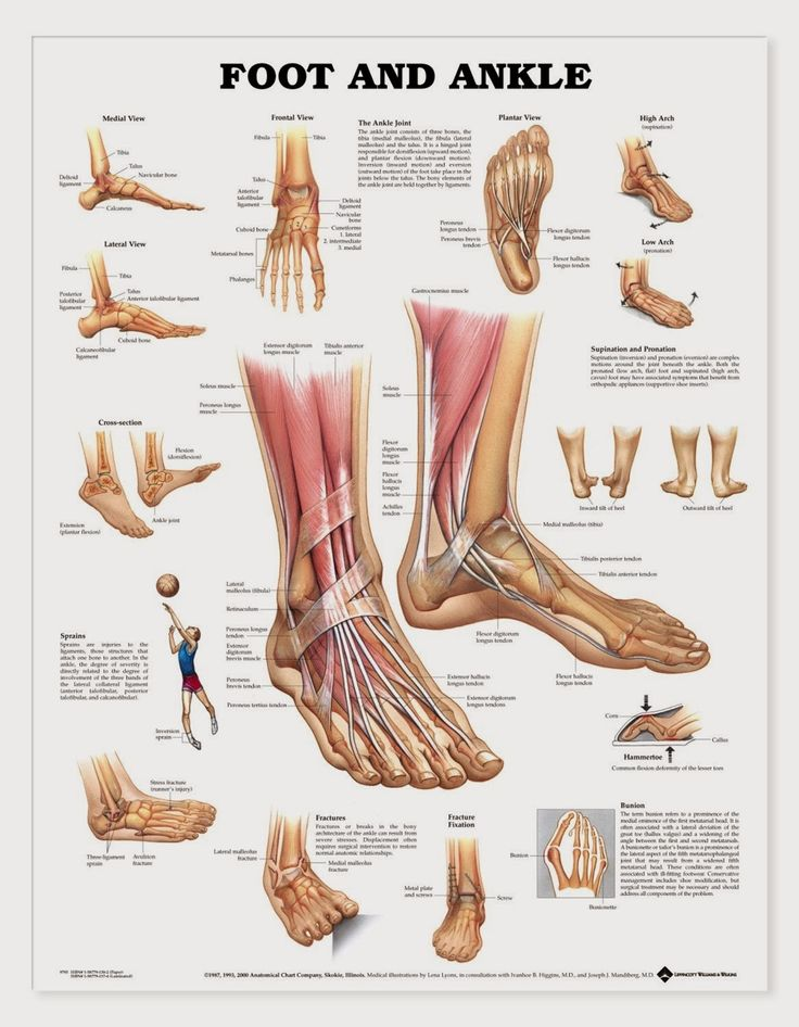 This chart shows foot and ankle bone and ligament anatomy, normal movement of the joints, and common conditions such as fractures, impingement and bunions. Description from anatomystuff.co.uk. I searched for this on bing.com/images