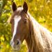 Science Fair: Is Horse Manure a Possible Energy Source in a Crisis?