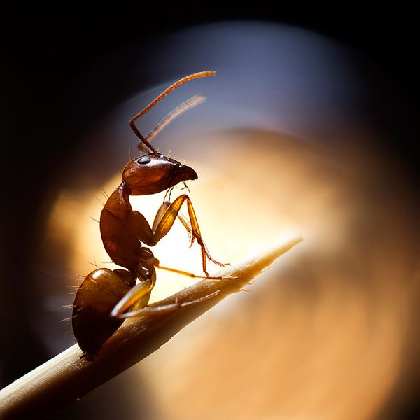 Ant #macrophotography #photography