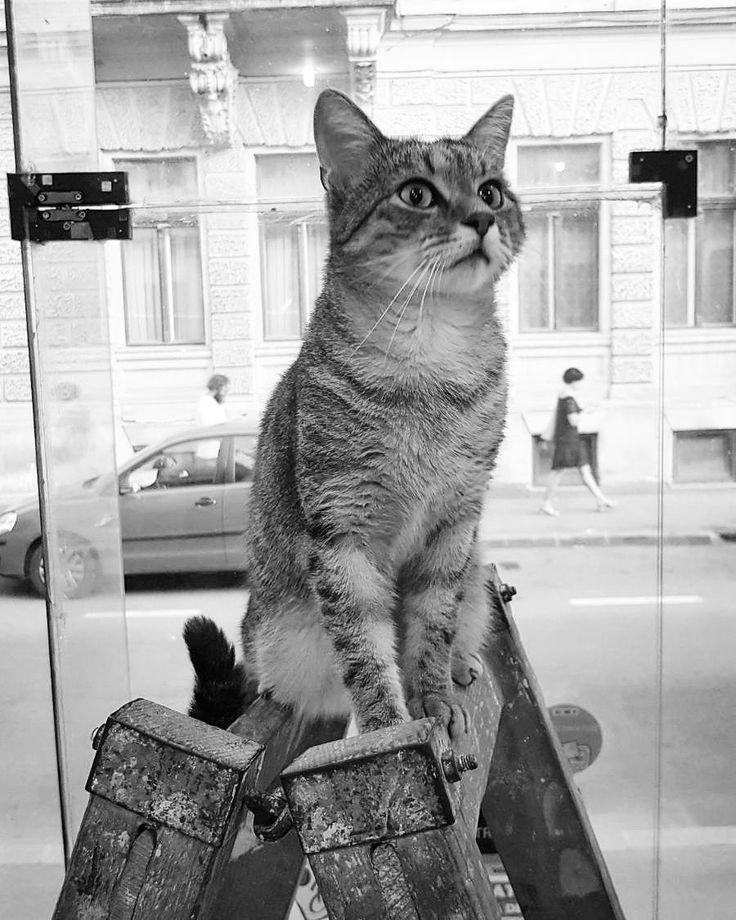 """91 aprecieri, 5 comentarii - Floraria Dorothy's (@florariadorothys) pe Instagram: """"I'm the King of the World!!! #catintheflowershop #clujcats #napocats #cluj #clujlife #viataincluj…"""""""