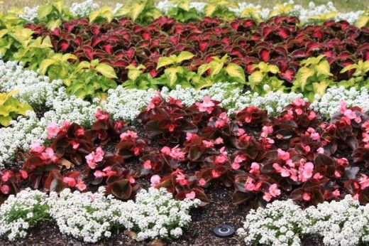 Don't let gardening in the shade be daunting. Try planting some of these annuals that thrive in the shade.