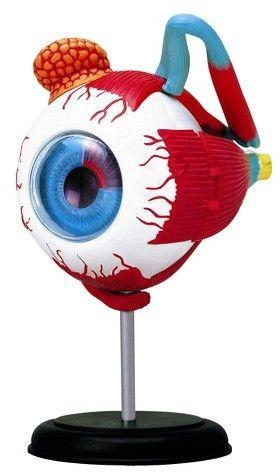 print english medical dictionary ophthalmologist optometrist optrician