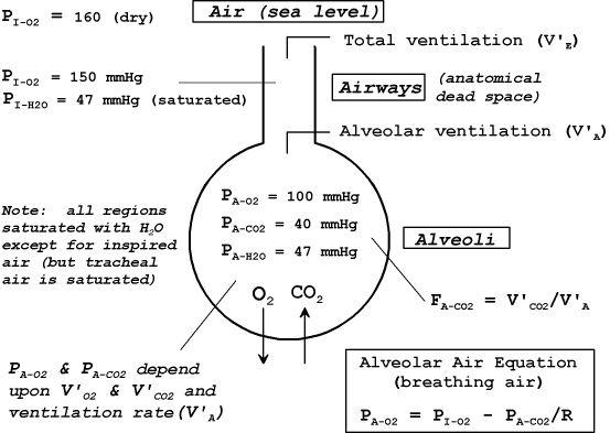 respiratory therapy case studies