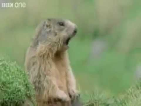 This is absolutely the funniest talking animal video ever!!!! period.