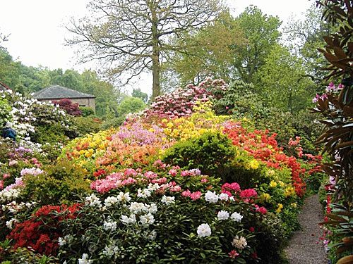 Outstanding  Best Images About Garden Rhododendrons On Pinterest  Trees  With Glamorous Lea Gardens  Rhododendron Garden In England With Attractive Climbing Frames For Garden Also Benefit Boutique Covent Garden In Addition Green Garden Paving And Jongleurs Covent Garden As Well As Jobs In Palm Beach Gardens Additionally Le Beaujolais Covent Garden From Pinterestcom With   Glamorous  Best Images About Garden Rhododendrons On Pinterest  Trees  With Attractive Lea Gardens  Rhododendron Garden In England And Outstanding Climbing Frames For Garden Also Benefit Boutique Covent Garden In Addition Green Garden Paving From Pinterestcom