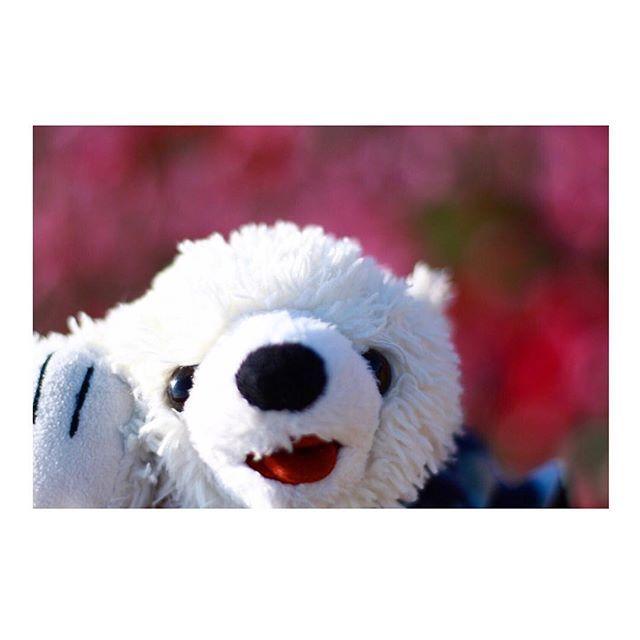 【tiffa_vn】さんのInstagramをピンしています。 《昨日でオリオンがおうちに来て1年と1ヶ月になりました💓 ということでオリオンの最近のベストショットを公開🙌 淡路島花さじきのコスモス畑にて🌷 カメラ専用のアカウントも、興味ある方は是非フォローよろしくお願いします💓 【@tiffa_camera】  #view #flower #cosmos #pic  #フリーモデル #photo #photography #サロンモデル #stuffedanimal #tokyocameraclub #ig_jp #ig_photo #forest #風景 #写真 #ファインダー越しの私の世界 #カメラ好きと繋がりたい #東京カメラ部 #カメラ #love #サロモ #photoshop #風景 #camera #森 #ぬい撮り  #ぬいぐるみ #ぬいどり #コスモス #花 #淡路島》