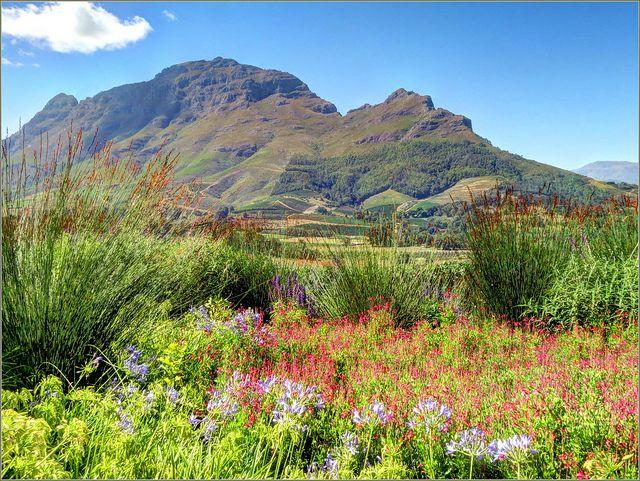 Gardens of the Delaire Graff Wine Estate, Stellenbosch, South Africa by robin denton, via Flickr