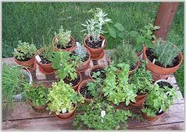 herb garden - Google Search