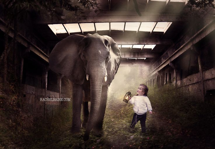 Ill Follow You Into The Dark  Photoshop composite, child portrait, Elephant and girl #childpportrait #composite #elephant
