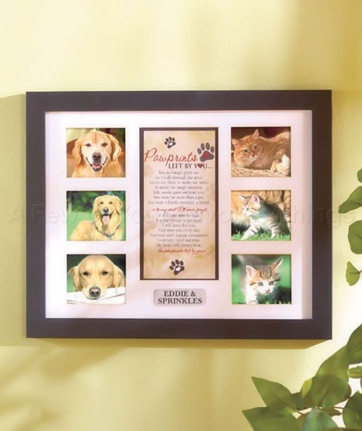 Paw Prints Left By You Pet Dog Cat Collage Photo Picture