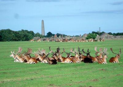Phoenix Park may be right in the centre of busy Dublin – but those deer ain't moving for nobody