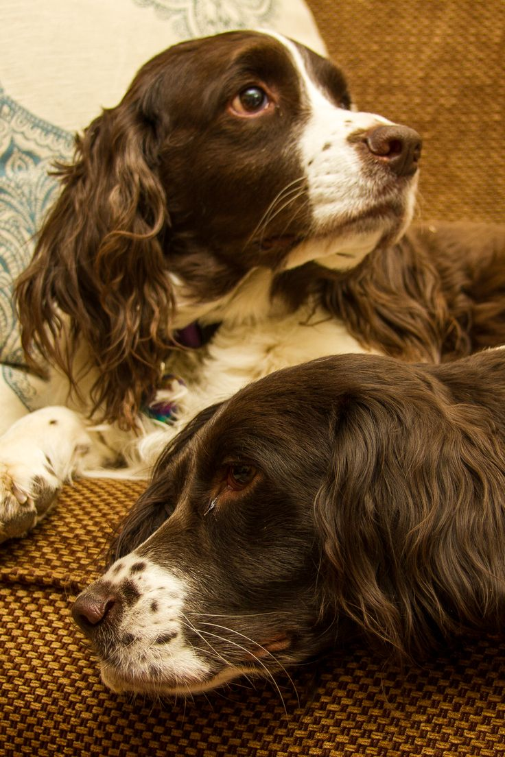 Scout and Bella, Christmas 2012