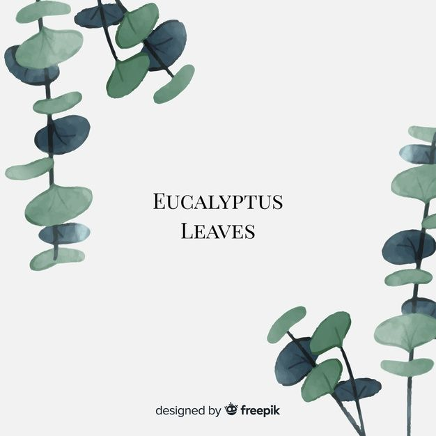Watercolor Eucalyptus Leaves Free Vector Freepik Freevector
