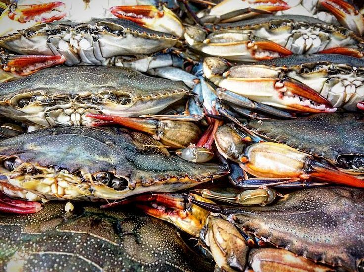 WHOLE BUNCH OF THESE GUYS ARRIVING AT #drakedevonshire THIS WEEKEND. LOOK OUT FOR SOFT SHELL CRAB EGGS BENEDICT AND CHICKEN FRIED CRAB WITH RAMP KIMCHI MAYO.  by matthewdemille