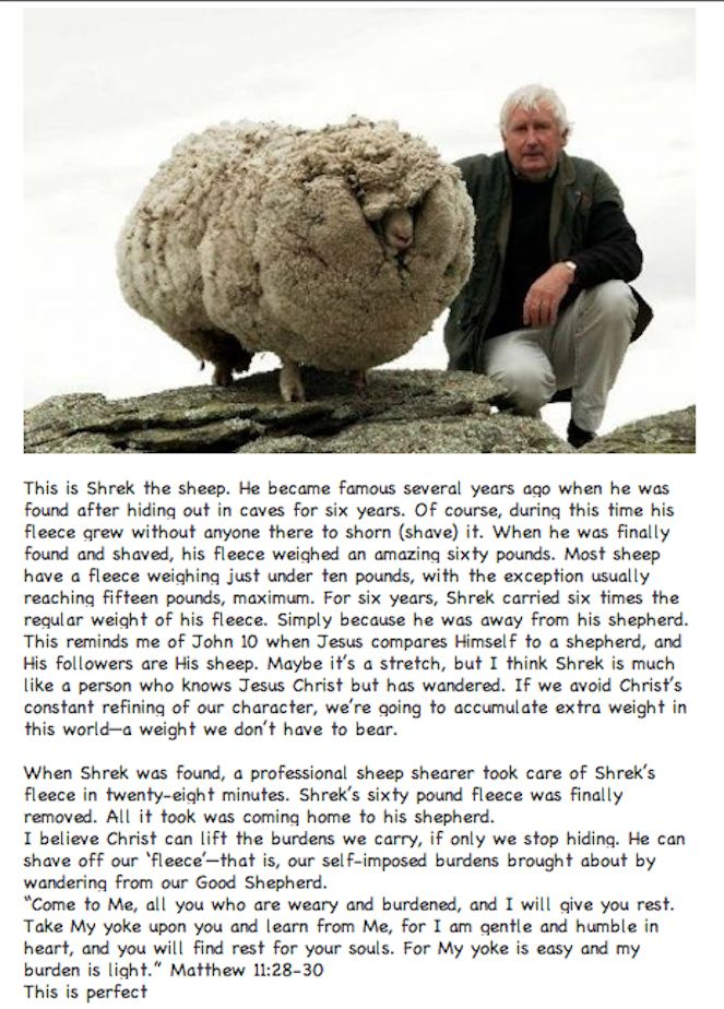 Shrek the Sheep...