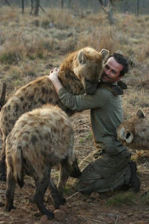 Quem pode imaginar uma hiena querendo carinho? ♥