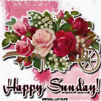 Happy Sunday roses days of the week sunday graphic happy sunday sunday greeting