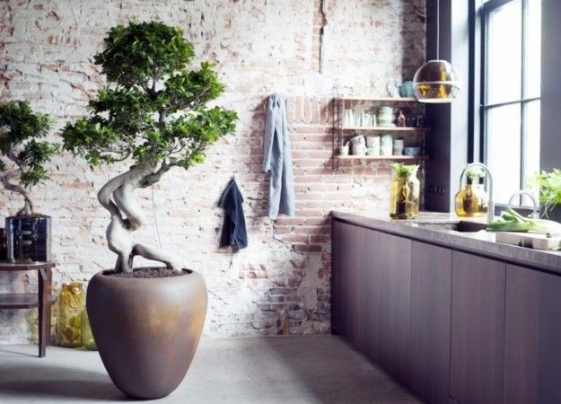Ficus Ginseng, the house plant to transform your home from www.redonline.co.uk