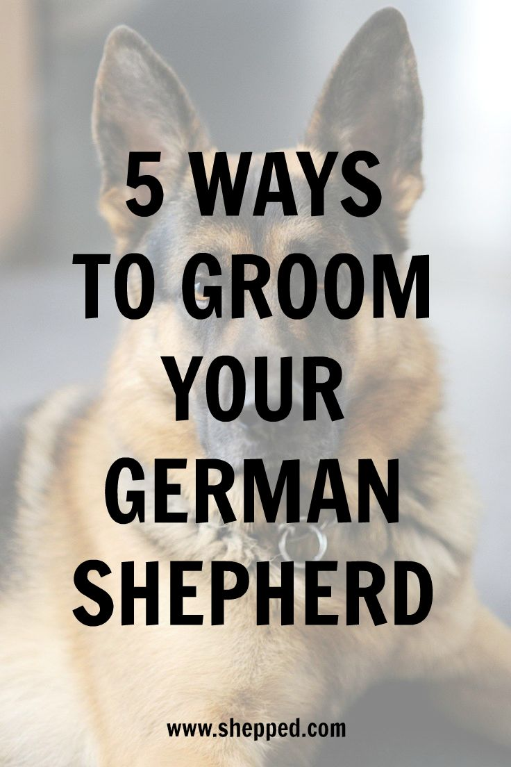 5 ways to groom your #GermanShepherd