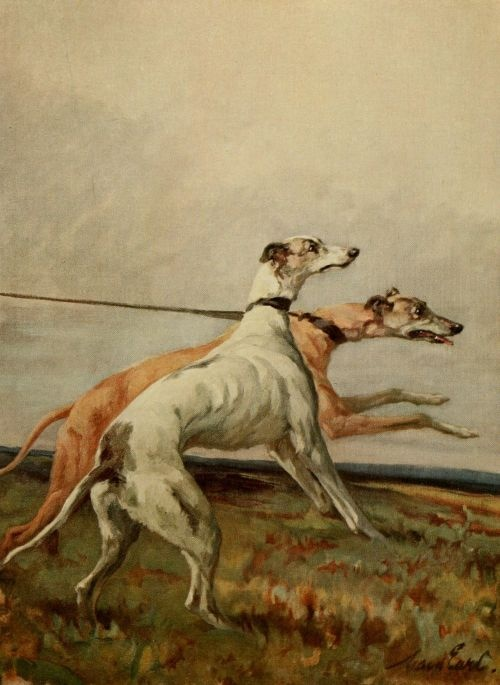 Earl, Maud (1864-1943) - The Power of the Dog 1910 (Greyhounds), 9-21. #vintage, #animals, #dog