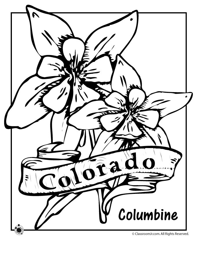 State Flower Coloring Pages Colorado State Flower Coloring Page – Classroom Jr.