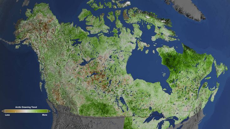 Usando 29 anos de dados dos satélites Landsat, pesquisadores da NASA descobriram Verdificação  na vegetação Ocidental em todo Alaska e Canadá. O aumento das temperaturas no Ártico têm levado a mais períodos de crescimento e mudando solos para as plantas. Os cientistas observaram tundras gramíneas mudando para matagais e arbustos crescendo mais densamente. De 1984-2012, esta verdificação ocorreu nas tundras ocidentais do Alasca, na costa norte do Canadá e da tundra de Quebec e Labrador.