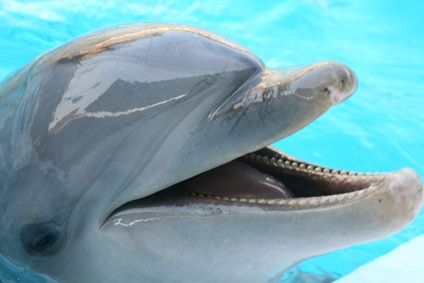 Cheap Places to Swim With Dolphins in Florida
