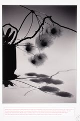 JOÃO PENALVA Irish Museum of Modern Art Editions. €360 full price €324 IMMA members price. Master Nanyo's evening shadows, 2006. Pigment print and card window mount. Image size: 42 x 29.9 cm. Signed and numbered by artist. Edition of 50. To avail of your Member's price simply enter discount code IMMAMEMBER at checkout.