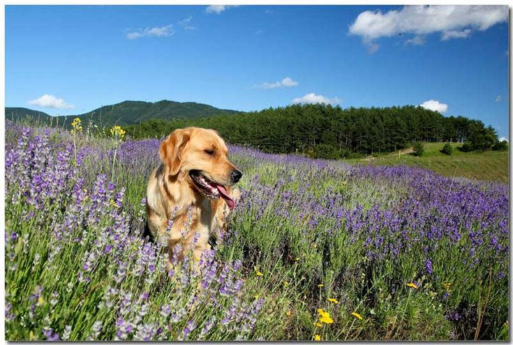 8 actividades con perro para el fin de semana: ruta guiada por el Albaicín, senderismo, cursos de formación, exposiciones caninas y deporte. Entra ahora en nuestro blog y descúbrelas / Mediterranean Natural