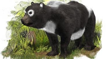 Un grupo español de científicos asegura que hace once millones de años vivió en Nombrevilla (Zaragoza) un 'primo' del oso panda gigante. El Agriarctos beatrix fue un plantígrado omnívoro de pequeño tamaño y, según los autores, estuvo relacionado genéticamente con los pandas gigantes.