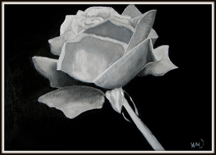 Rose in gray. Paintings on camvas by Art Online
