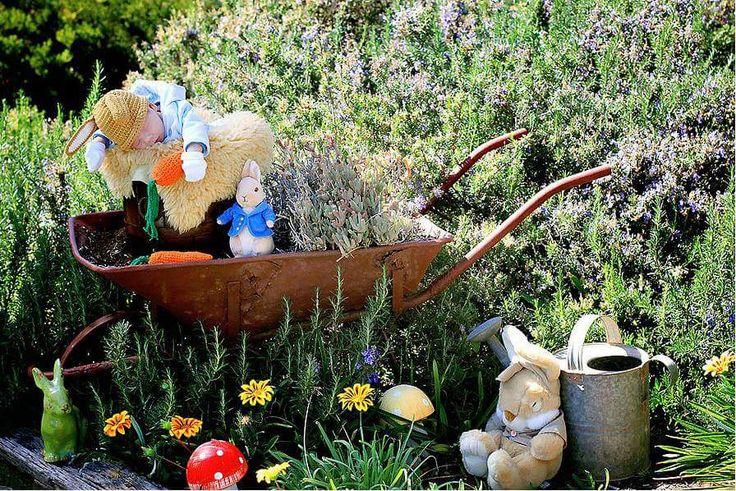 Peter Rabbit Newborn Photo Shoot. Beatrix Potter inspired.