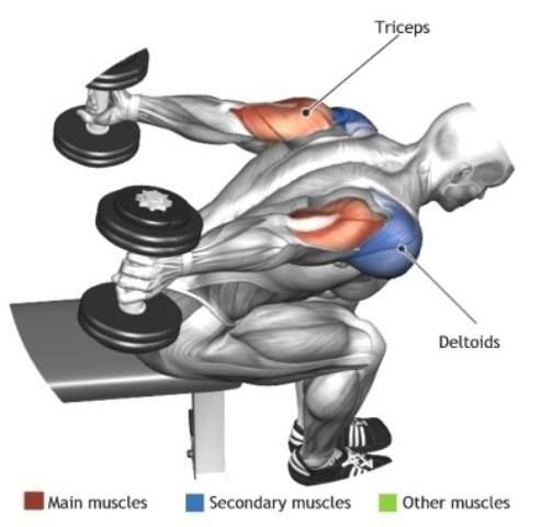 TRICEPS - SEATED BENT OVER TWO ARM DUMBBELL TRICEP EXTENSION