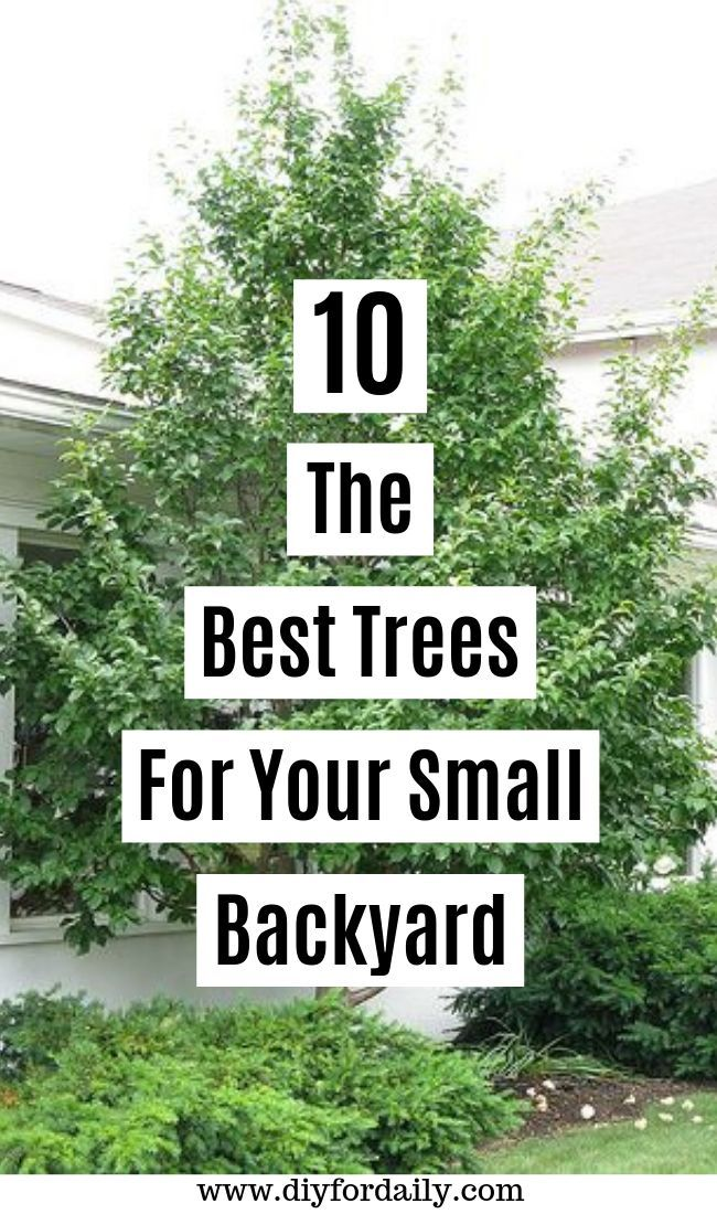 10 The Best Trees For Small Yards Try 4th And 9th In 2020
