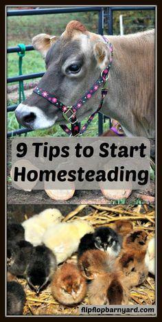 9 Tips to Start Homesteading | The Flip Flop Barnyard