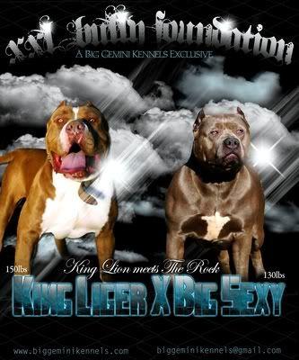 Big Gemini Bully Pitbulls, Blue pitbull - Pitbull breeders - Pitbull kennels - American Pitbull Terriers - Blue Pitbulls - Pitbull Puppies For Sale - blue pit bull puppies for sale , pitbull breeders - blue pit bull breeders , bully pitbull breeders - pit