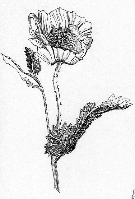 хрупкий цветок рисунок подтянутое стройное